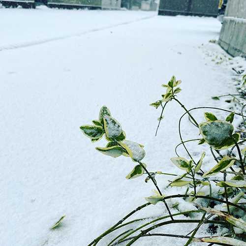 本日clayは積雪のため、臨時休業とさせていただきます。