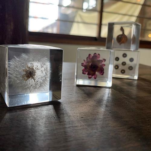 「sola cube」お花見にも行きにくい今のご時世。でも、見るとやっぱりほっとする。